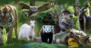 النعت باسماء الحيوانات في اللغة السويدية